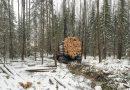 Правоохранители Ярославской области поймали «черных лесорубов»