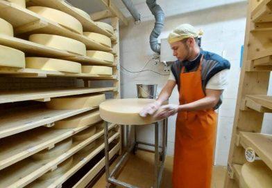 В Ростовском районе развивается масштабное сырное производство