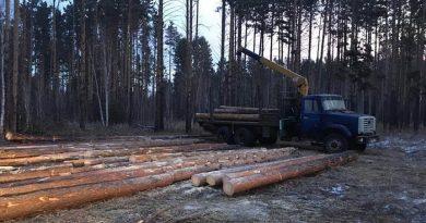«Черные» лесорубы вырубили в Ярославской области деревьев на 677 тыс. рублей